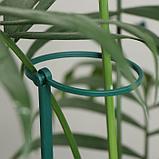 Поддержка для растений, h = 40,5 см, цвет МИКС, фото 4