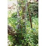 Колышек для подвязки растений, h = 60 см, d = 0.3 см, проволочный, зелёный, фото 3