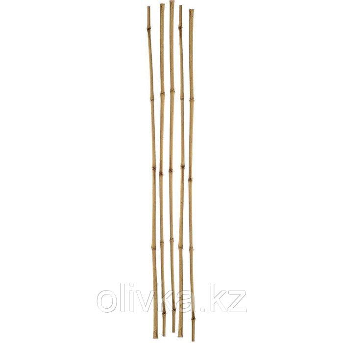 Колышек для подвязки растений, h = 75 см, d = 1 см, набор 5 шт., бамбук