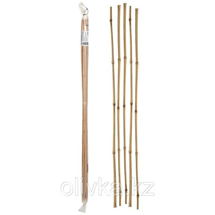 Колышек для подвязки растений, h = 120 см, d = 1 - 1.2 см, набор 5 шт., бамбук