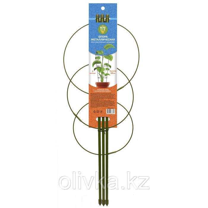 Опора для растений, 3 кольца, h = 60 см, d = 22-18-8 см, металл