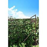 Опора для малины, 150 × 48 × 1,5 см, коричневая, фото 3