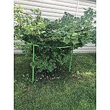 Кустодержатель для смородины и крыжовника, 80 × 80 × 70 см, зелёный, фото 3
