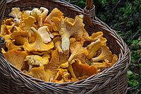 Лисички гриб 50 гр В НАЛИЧИИ В АЛМАТЫ