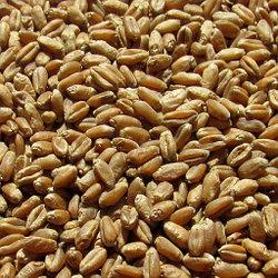 Пшеница на развес