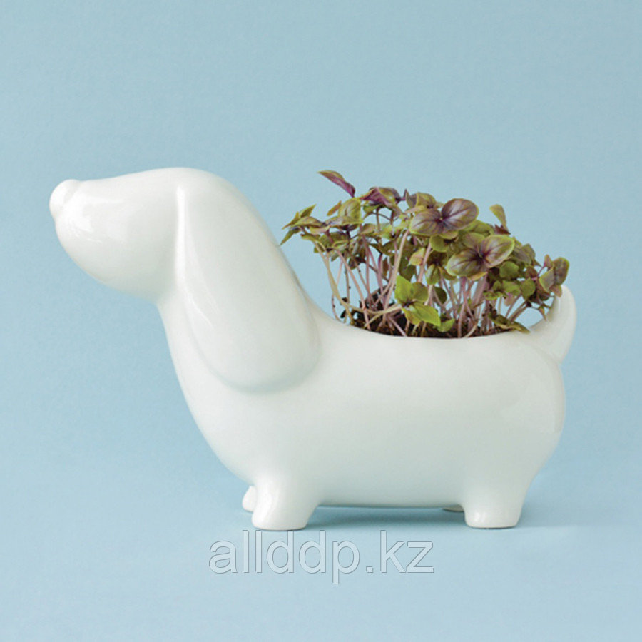 Набор для выращивания Eco Собачка