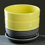 Лагуна желтый бук №1 0,75л, фото 2