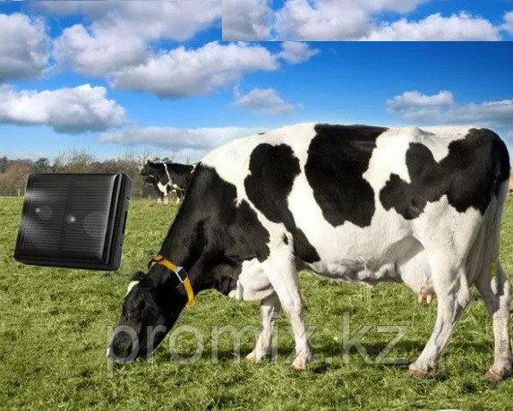 GPS трекер  для КРС ( лошадей, коров )  GSM