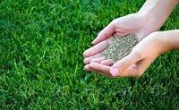 Семена газона. Травосмесь газонная.