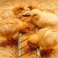 Комбикорм для цыплят Рост