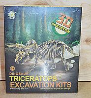 501/505  3D скелет раскопки динозавра средний разные виды 23*19см