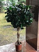 Искусственное дерево Рускус