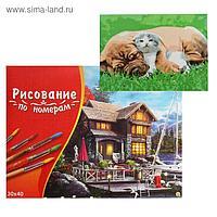 Картина по номерам 30×40 см в коробке «Пёс и котёнок на траве»