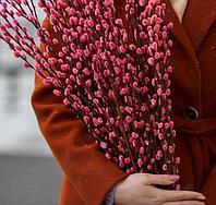 Верба, сухоцветы