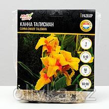 "Канна Карликовая ""Талисман"", р-р I, 1 шт"