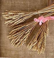 Пшеница, сухоцветы