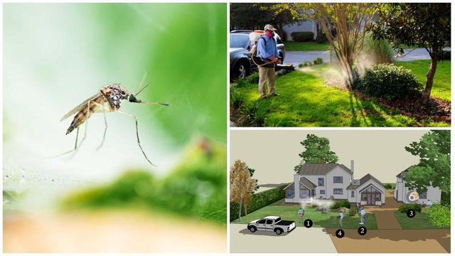 Дезинфекция от комаров