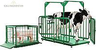Весы для взвешивания коров и свиней