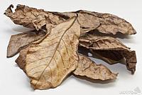 Листья миндального дерева 15 шт