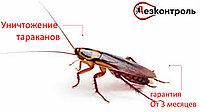 Уничтожение тараканов Алматы-области