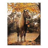 Роспись по холсту «Конь осенью» по номерам с красками по 3 мл+ кисти+инстр+крепеж, 30 × 40 см