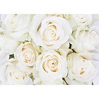 Фотообои «Белые розы» (8 листов), 280х200 см