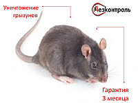 Уничтожение грызунов Алматы-области