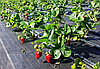 Агроткань черный против сорняков (тканый геотекстиль)
