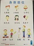 Easy Steps to Chinese. Том 1. Набор постеров, фото 3
