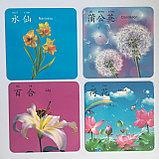 """Карточки с картинками """"Овощи и фрукты"""" на китайском языке, фото 4"""