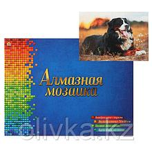 Алмазная мозаика квадратная 30×40 см, полное заполнение, 28 цв. «Бернский скотт в поле»