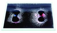 Noname Набор «Эксперименты с магнитным полем» арт. RN9521