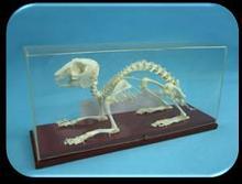 Noname Скелеты: кролика, лягушки, птицы арт. Ed16883