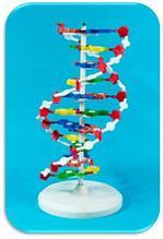 Noname Модель структуры «ДНК» арт. Ed16884