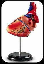 Noname Модель «Сердце» арт. Ed17646