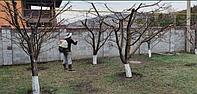 Обработка сада от клещей, вредителей и болезней