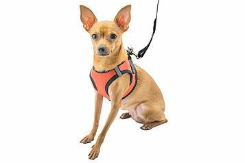 Шлейка + поводок ТОП для собак средних пород №8