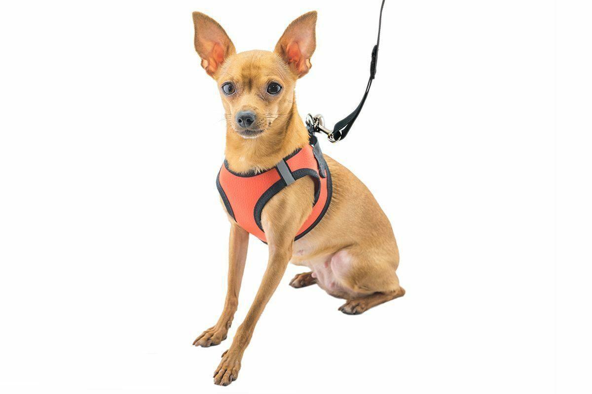 Шлейка + поводок ТОП для собак средних пород №11