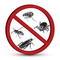 Дезинсекция   уничтожение насекомых