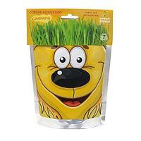 Happy Plant: Львенок
