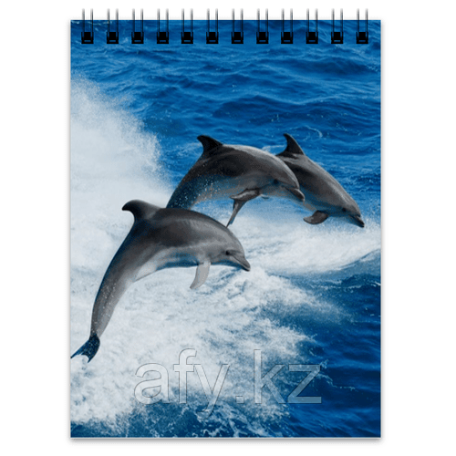 Блокнот дельфин