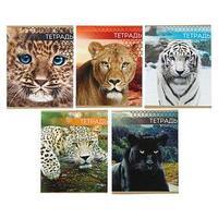 Тетрадь 48 листов в линейку 'Дикие кошки', обложка мелованный картон, МИКС (комплект из 5 шт.)