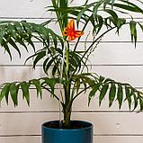 Поддержка для орхидей, h = 39 см, пластик, цвет МИКС, «Бабочка», фото 5