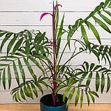 Поддержка для орхидей, h = 60 см, пластик, цвет МИКС, «Пальма», фото 5