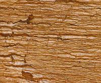 Травертин Persian Brown Walnut