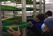 Гидропоника (Аэропоника) - МГУ - мобильная гидропонная установка, производительностью 400, 500 кг, фото 2