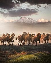 GPS слежение за лошадьми