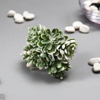 Искусственный суккулент для создания флорариума 'Аихризон' набор 6 шт 11 см (комплект из 6 шт.)