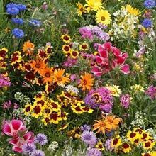Семена цветочной смеси