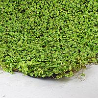 Коврик Ряска искусственный, (L100см, W50см), тканевый светло-зеленый